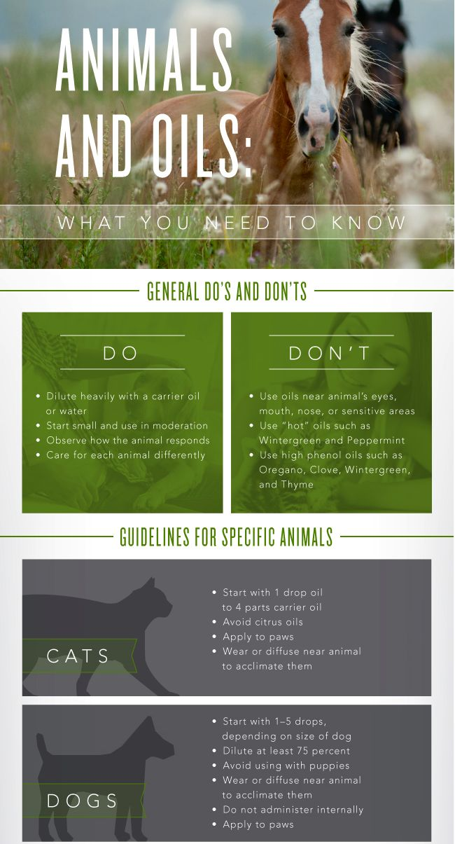 Essential Oils for Cats and Dogs