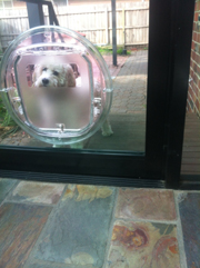 Pet door installation in Caulfield North by Ometek Glass