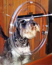 Dog Doors Melbourne Installation Extra Large Size Patio